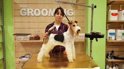 taller-de-stripping-con-cris-un-magnifico-fox-terrier